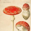 Reproducción lámina vintage setas 002
