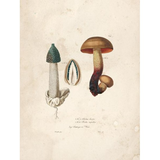 Reproduction of vintage mushrooms foil 003