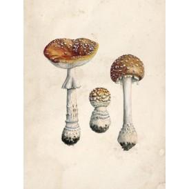 Reproduction of vintage mushrooms foil 004
