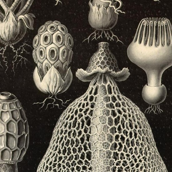 Reproduction of vintage mushrooms 008