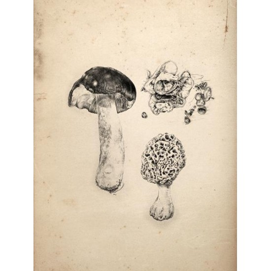 Reproduction of vintage mushrooms 009
