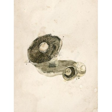 Reproducción lámina vintage setas 010
