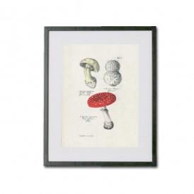 Reproducción lámina vintage setas 012