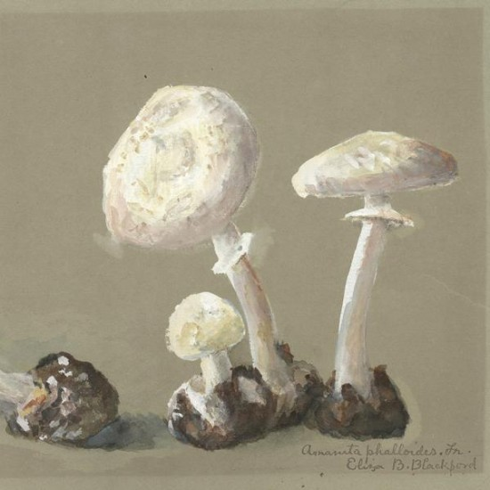 Reproduction of vintage mushrooms 013