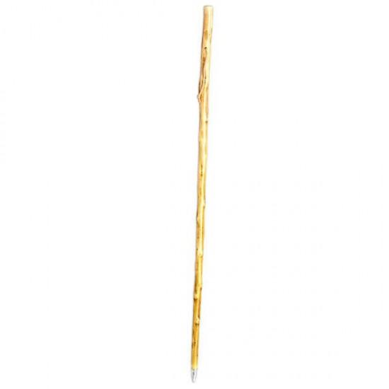Light brown cane for mushroom foraging