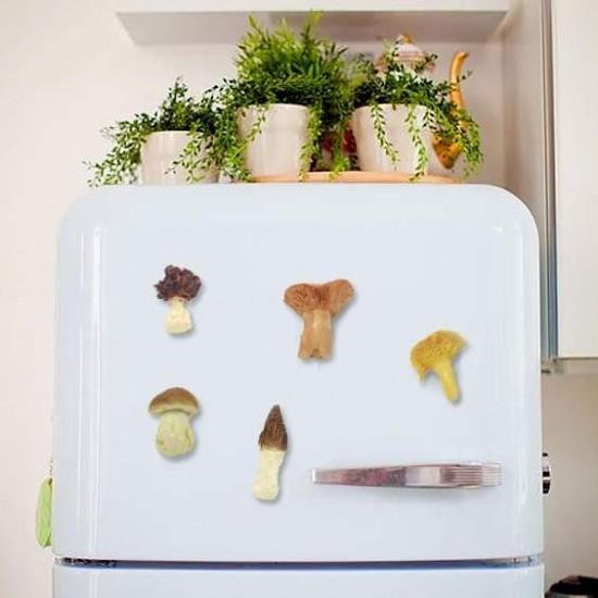 Set of 5 mushrooms with fridge magnet