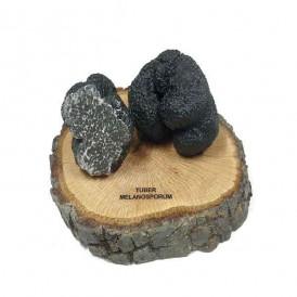 Réplica en resina de trufa negra, t. melanosporum