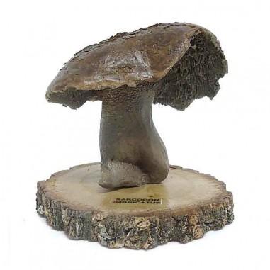 Réplica en resina de Sarcodon imbricatus