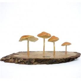 Réplica en resina de Senderuela, M. oreades