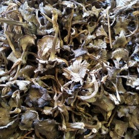 Dehydrated gray trumpet - Canthrellus tubaeformis