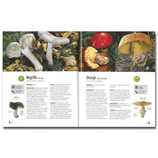 Mushrooms of the Basque Country