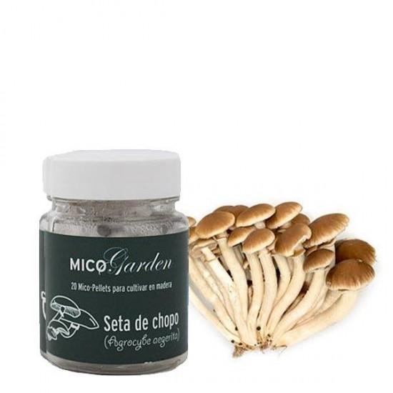 Micelio en pellets para cultivar Seta de chopo