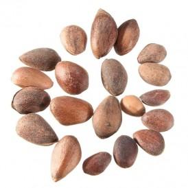 Semillas Pinus pinaster 25 ud (PEFC)