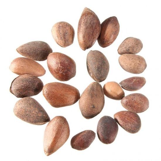 Pinus sylvestris seeds 25 pcs (PEFC)