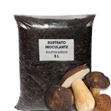 Supporting inoculant substrate Boletus aereus