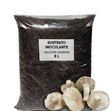 Perrechico inoculant support substrate