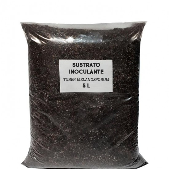 Supporting inoculant substrate Tuber melanosporum