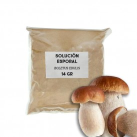 Sporal support solution - Boletus edulis