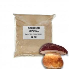 Solución esporal de apoyo - Boletus pinicola