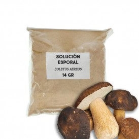 Sporal support solution - Boletus aereus