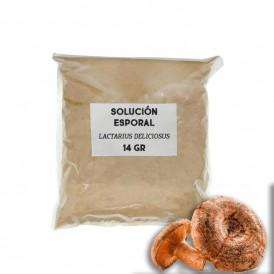 Solución esporal de apoyo - Lactarius deliciosus