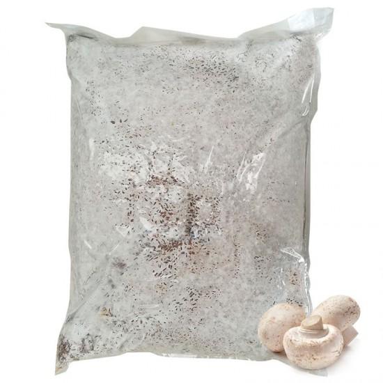 Mycelium Agaricus bisporus 30 l