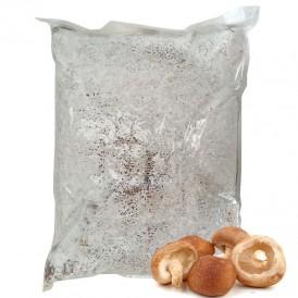 Shitake Mycelium 30 l