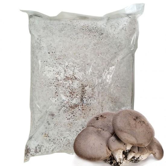 Mycelium Pleurotus eryngii 30 l