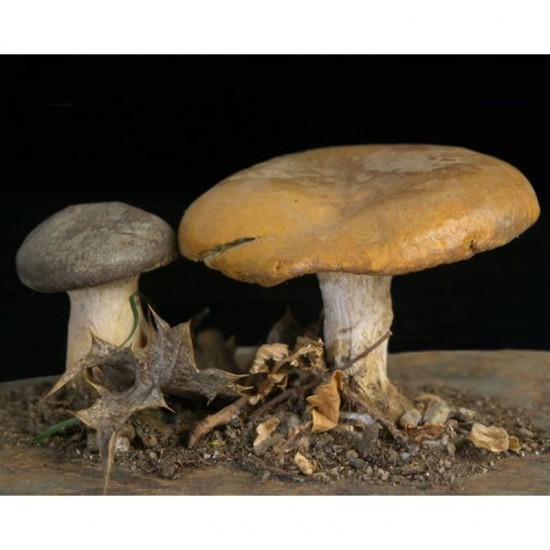 Custom replicas of mushrooms
