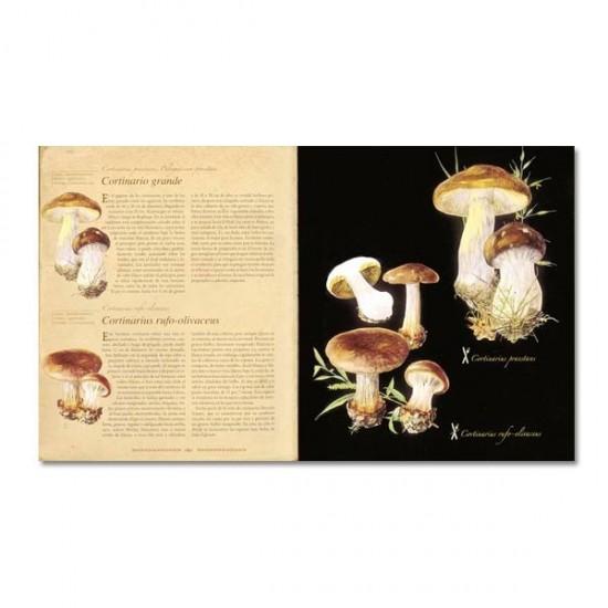Illustrated Encyclopedia of Mushrooms
