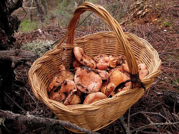 Al monte con cesta de mimbre