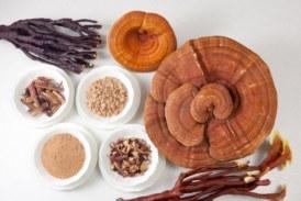 Las setas medicinales, uno de los remedios naturales más antiguos del mundo