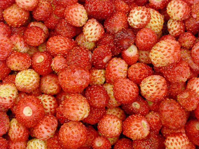 fresas silvestres1