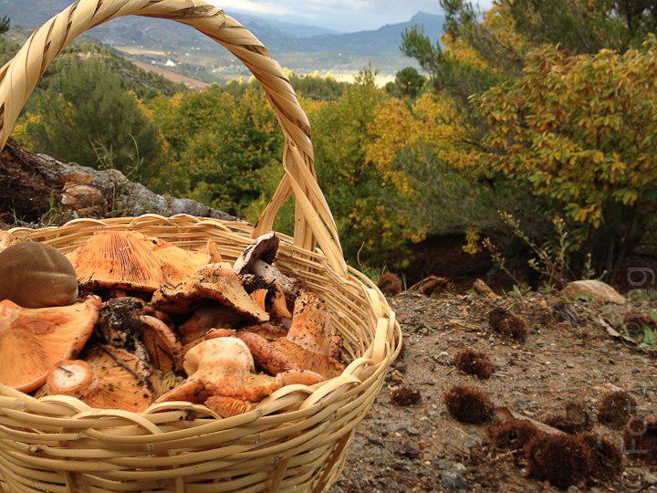 cesta-de-setas-de-otoño