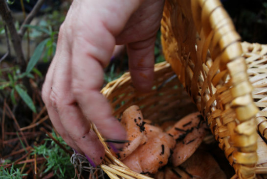 ✅ El reino fungi, ni animal ni vegetal