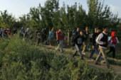 ✅ Una amenaza más para los refugiados, las setas venenosas