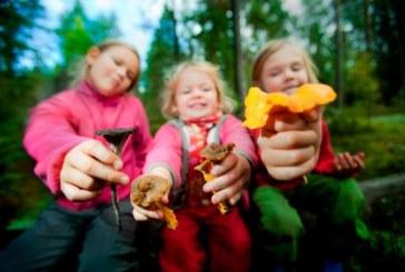 Consejos  para salir a buscar setas con niños
