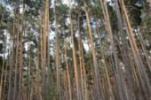 ¿Conoces a la Red Europea de Parques Micológicos?