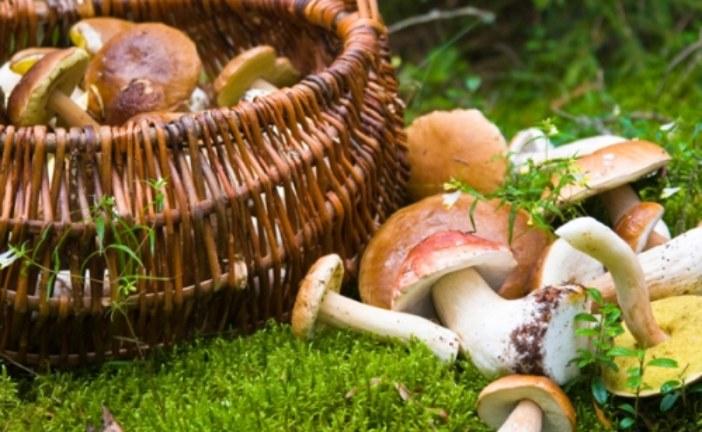 Entre el 27 al 29 de noviembre, cita con las Jornadas Micológicas del Parque de los Alcornocales