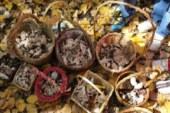 La Junta de Andalucía regula la recogida de setas en Jaén, para evitar la recolección furtiva