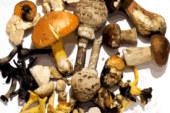 Mieres presenta sus Jornadas gastronómicas de setas de primavera