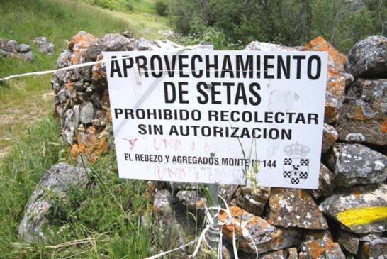 """Jornada empresarial """"Soluciones para regular la recogida y comercialización de la micología en España"""". Valladolid, 10 junio 2016"""