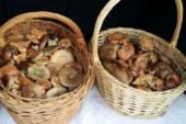 ✅ Navaja, cesta y setas. El equipamiento micológico