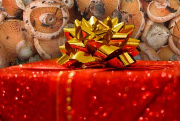 ✅ Regalos de navidad relacionados con las setas