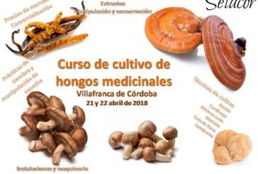 Aprende a cultivar setas medicinales