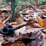trompeta de los muertos-craterellus-cornucopioides-trompeta negra-la casa de las setas
