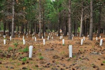 Árboles micorrizados. Cultiva tus propias setas en el monte