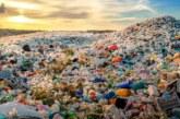 Setas que reciclan. Una nueva aplicación de los hongos
