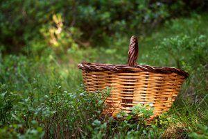 guia para comprar una cesta para setas - cestas de mimbre y castaño - la casa de las setas