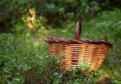 06-guia-para-comprar-cestas-para-setas